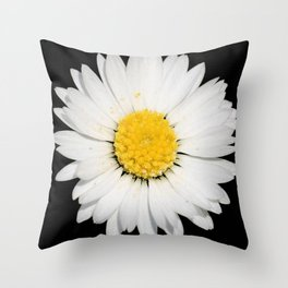 Nine Common Daisies Isolated on A Black Backgound Throw Pillow
