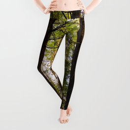 Within The Redwoods Leggings