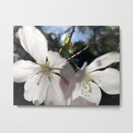 Cherry Flowers Duo Metal Print