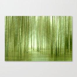 Birch forest 50 Canvas Print