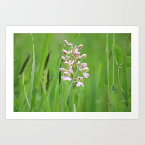 Wild orchid - untouched photography Art Print