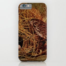 Vintage Print - Birds and Nature (1905) - The Song Sparrow iPhone Case
