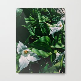 Lily's in the garden #flower Metal Print
