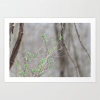 Spring Buds in the Woods Art Print