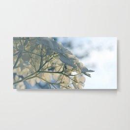 Delicate White Hydrangea Flowers Metal Print