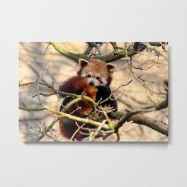 Sleepy Red Panda Metal Print