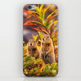 Autumn Picnic iPhone Skin