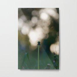 Dandelion blossom defocused Metal Print