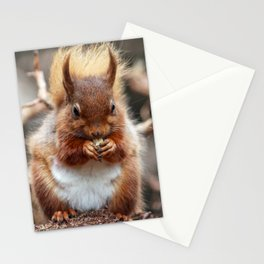 nutty squirrel Stationery Cards