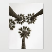 palm trees Canvas Prints featuring palm trees by Joao Bizarro