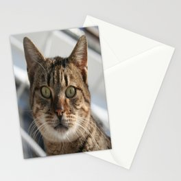 Beautiful Eyed Tabby Cat  Stationery Cards
