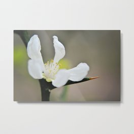White flower with thorn Metal Print