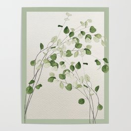 Eucalyptus branches Poster