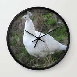 Albino peahen Wall Clock