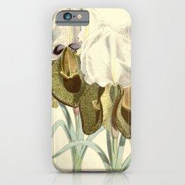Flower 5847 iris iberica Iberian Iris1 iPhone Case