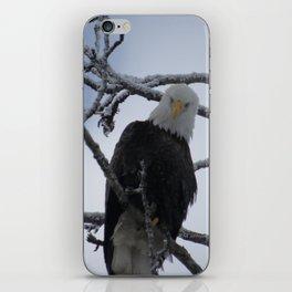 Bald Eagle at 12 Below -- Soldotna, Alaska iPhone Skin
