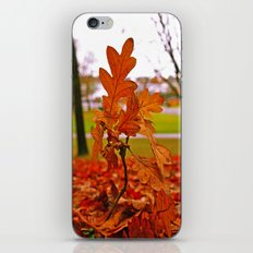 Fallen leaves iPhone & iPod Skin