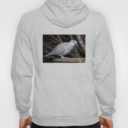 Baby Collared Dove Hoody