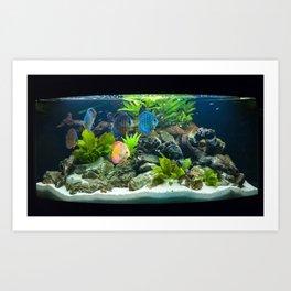 Aquarium fishes  Art Print