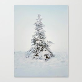Frosty tree on a foggy day Canvas Print