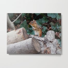 Hard life chippy Metal Print