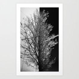 50/50 Art Print