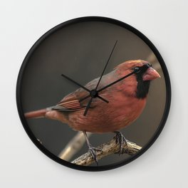 Red cardinal 7686 Wall Clock