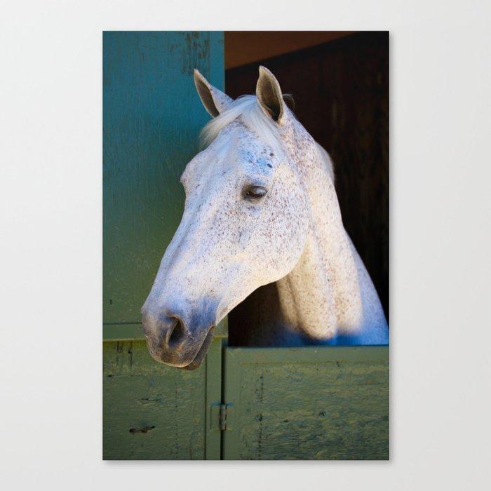 Warmblood Horse Canvas Print