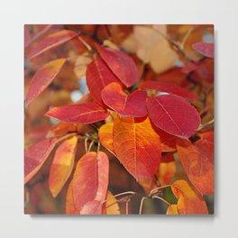 Autumn Glory - Juneberry leaves, Amelanchier Metal Print