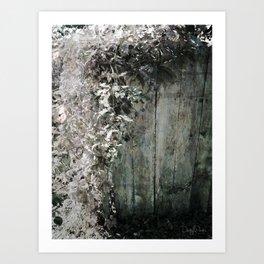 Climbing Vine Art Print