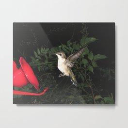 Hummingbird Rampant 26 Metal Print