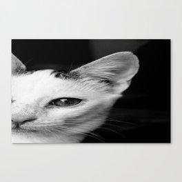Cat-Fanny *-* [SWAG] Canvas Print