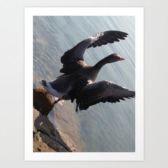 Free again #1 - Goose spreading it's wings Art Print