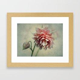 Pretty red columbine flower Framed Art Print