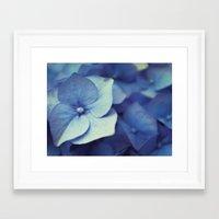 hydrangea Framed Art Prints featuring Hydrangea by Anne Staub