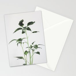 Chili Stationery Cards