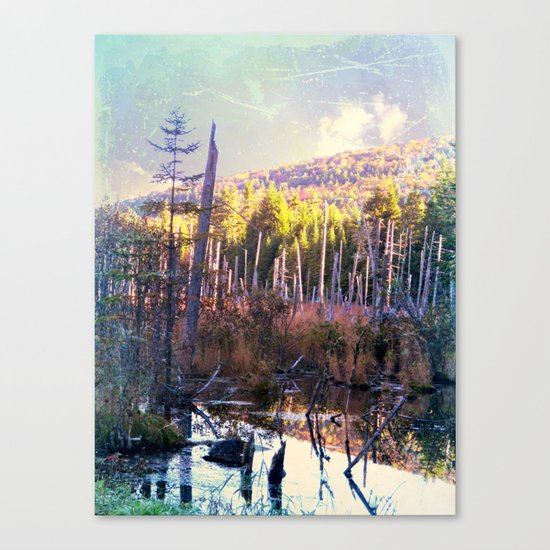 Inside the North Woods of Maine Canvas Print