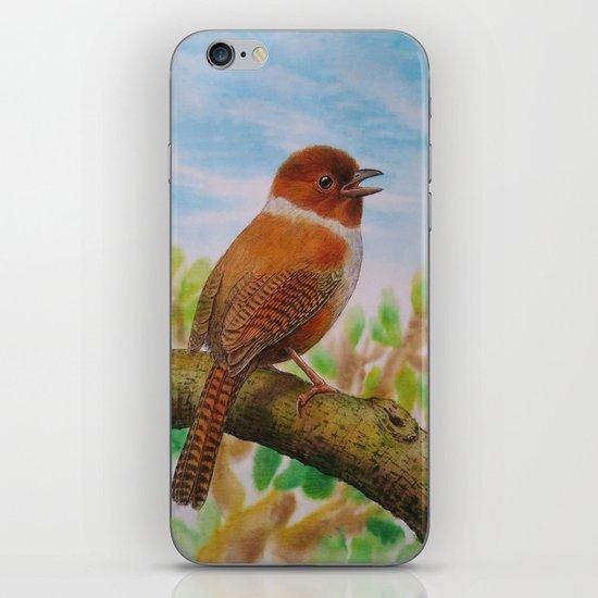 A Brown Bird iPhone & iPod Skin