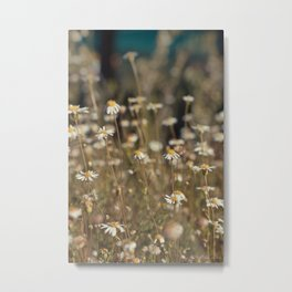 Field of Daisies - Floral Photography #Society6 Metal Print