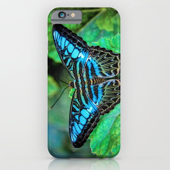 BUTTERFLY BLUE iPhone & iPod Case