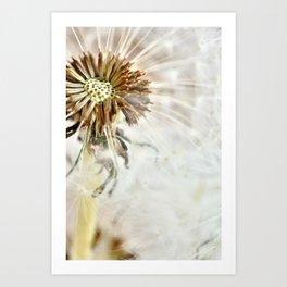 Dandelion 2013 no.20 Art Print