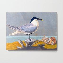 Sandwich Tern Bird Metal Print