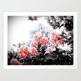 Living Coral Pink Peach & Gray Floral Art Print