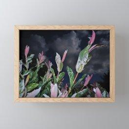 GREEN AND PINK VARIEGATED SHRUB WITH DARK SKY Framed Mini Art Print