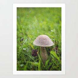 Mushroom in the Morning Dew by Althéa Photo Art Print