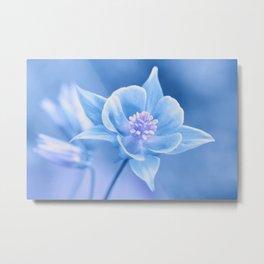 Columbine Flower 161 Metal Print
