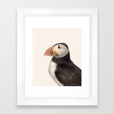 Puffin Framed Art Print