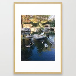 Ducks at the Pearl District Framed Art Print