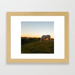 White horse eating in the field. Framed Art Print