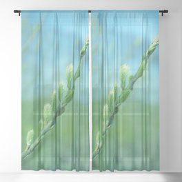 willow catkin Sheer Curtain